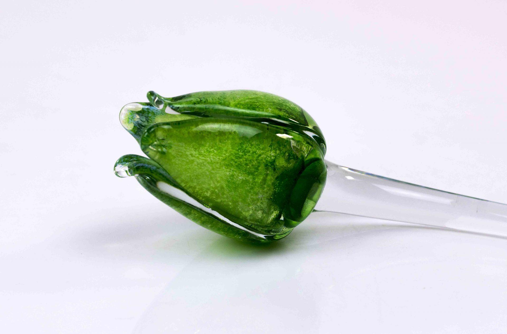 groene tulp