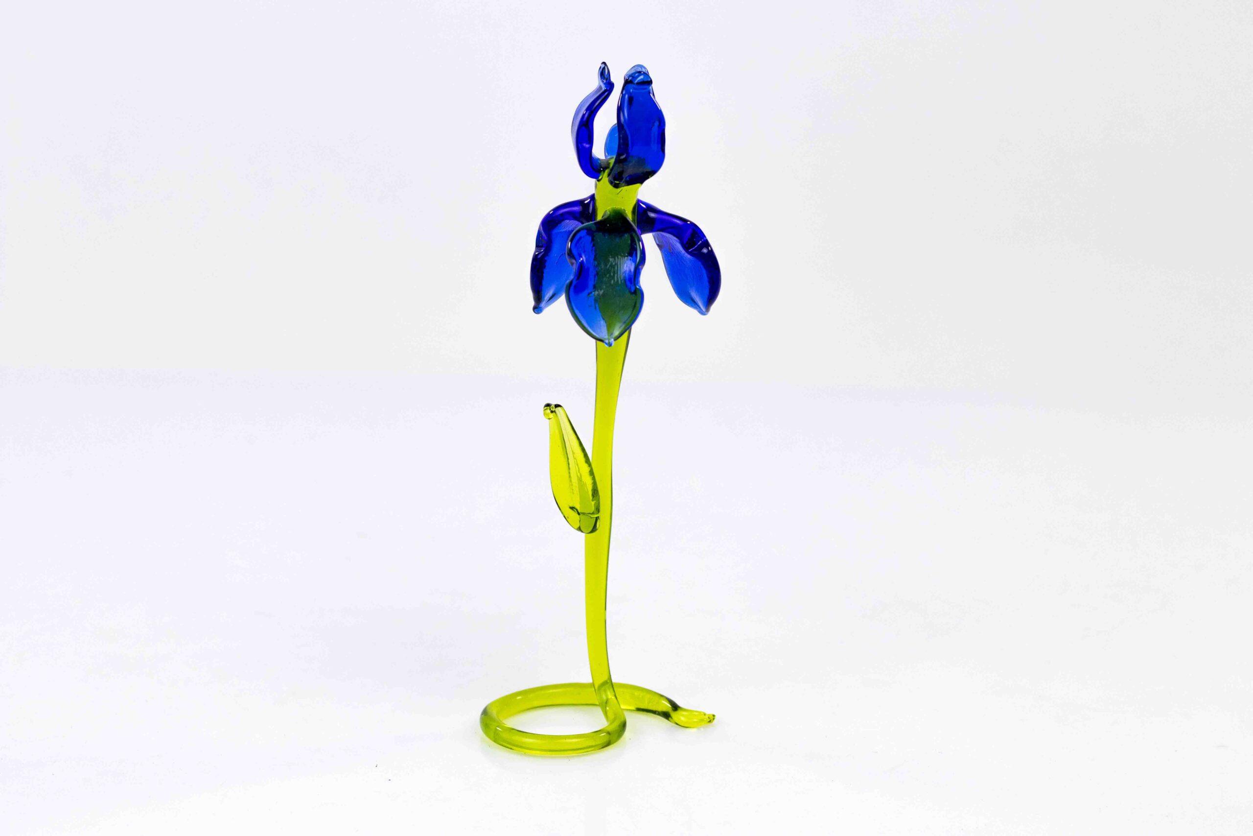 iris blauw staand