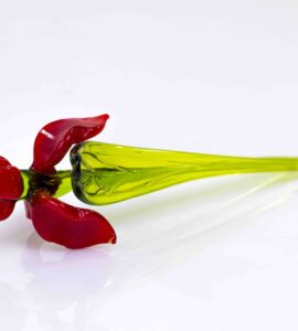 iris rood